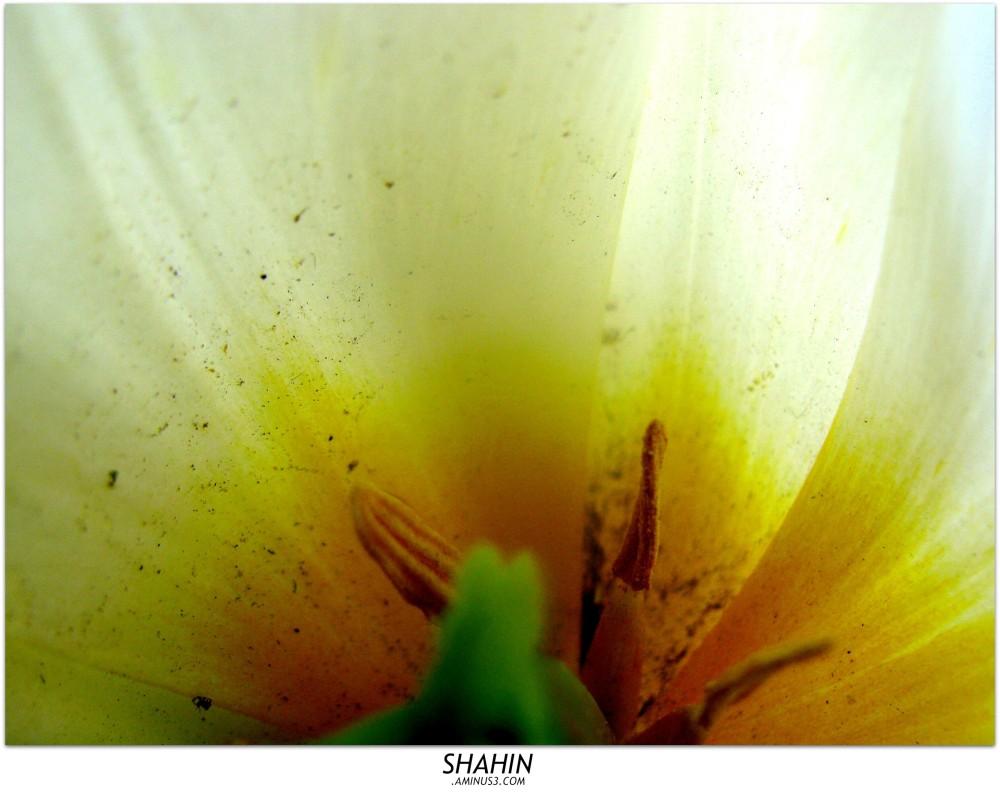 Flower 32