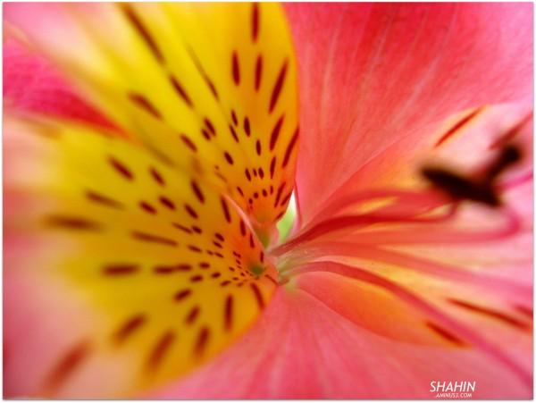 Flower 35