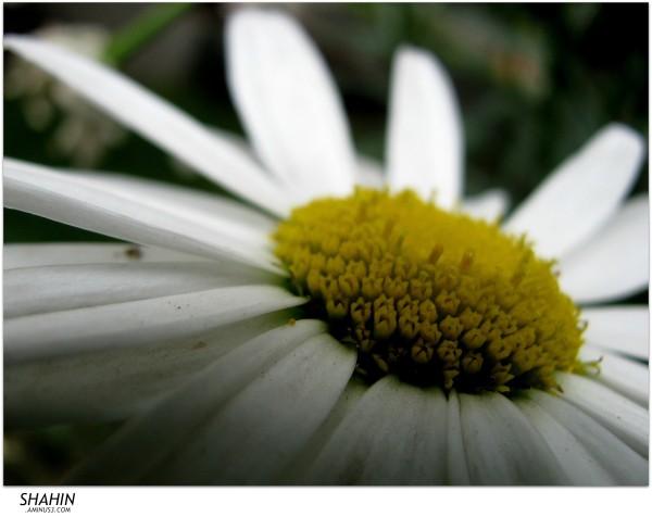 Flower 36