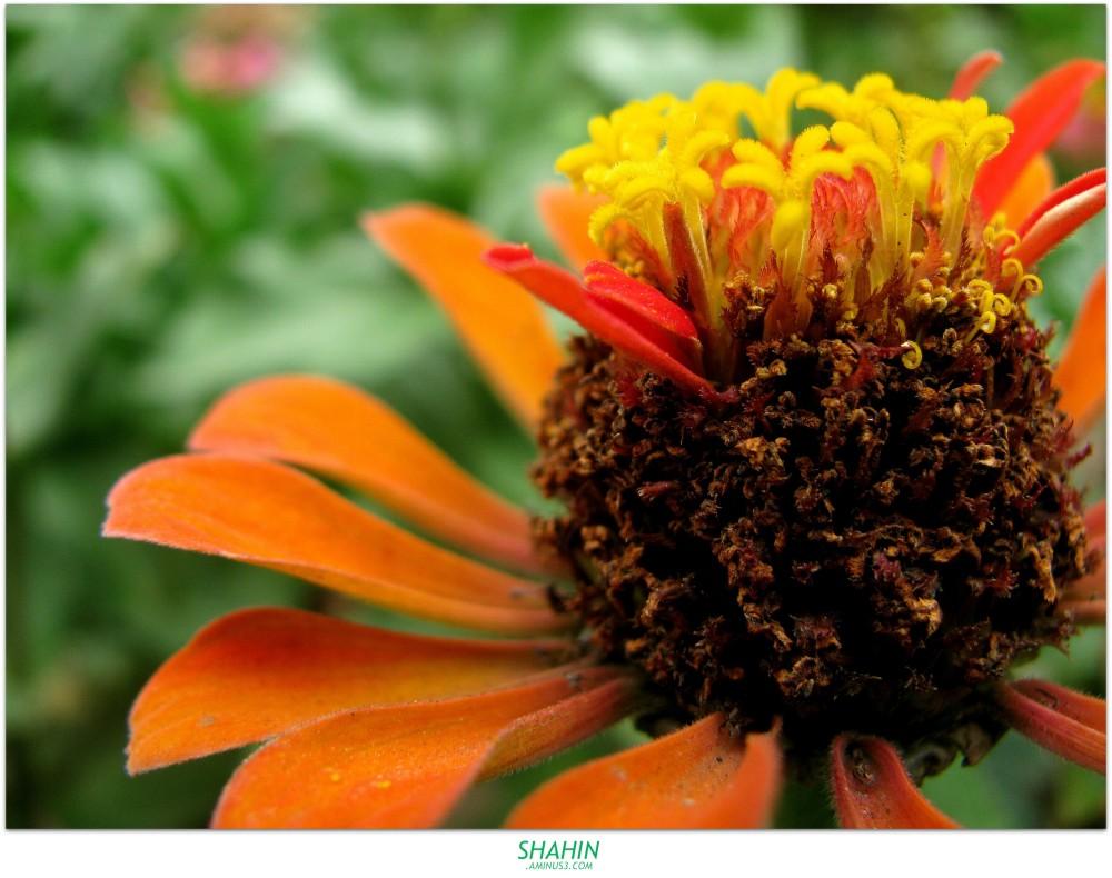 Flower 47