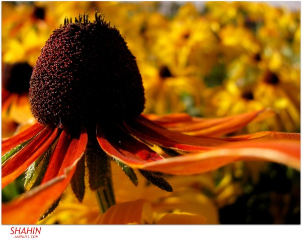 Flower 52
