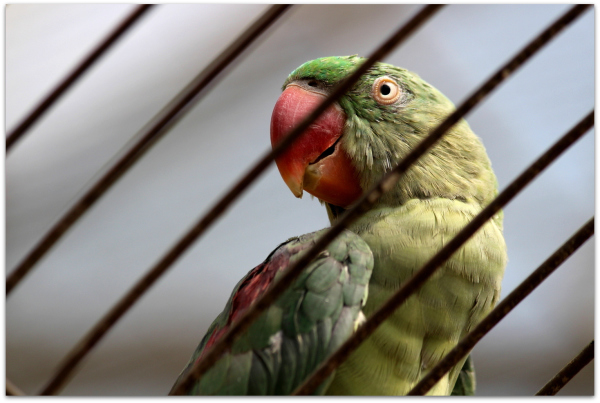 Tehran Birds Garden 03