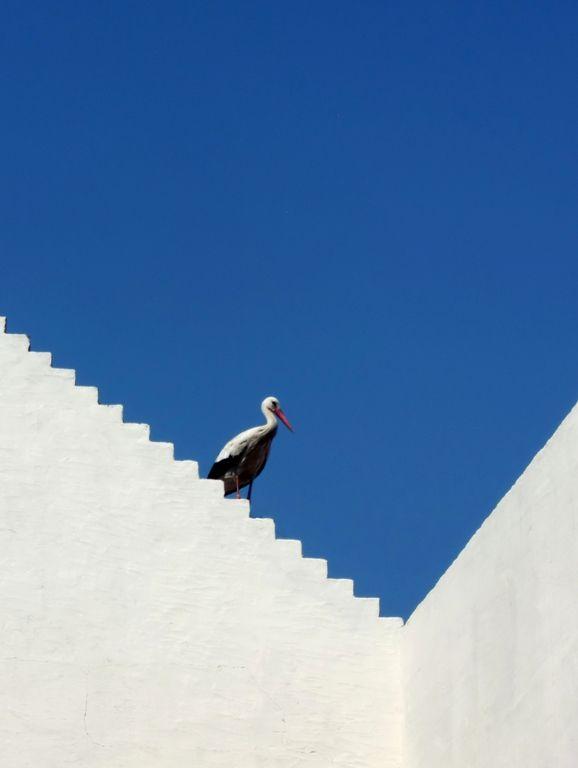 ... the stork, the secret heraldic animal ... (V)