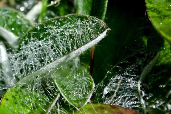 ... morning dew ...
