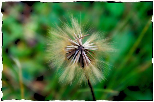 ... delicate flower ...