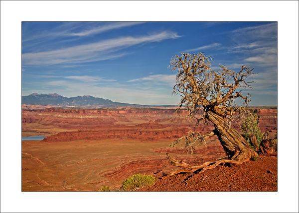 Dead Tree in Dead Horse Point