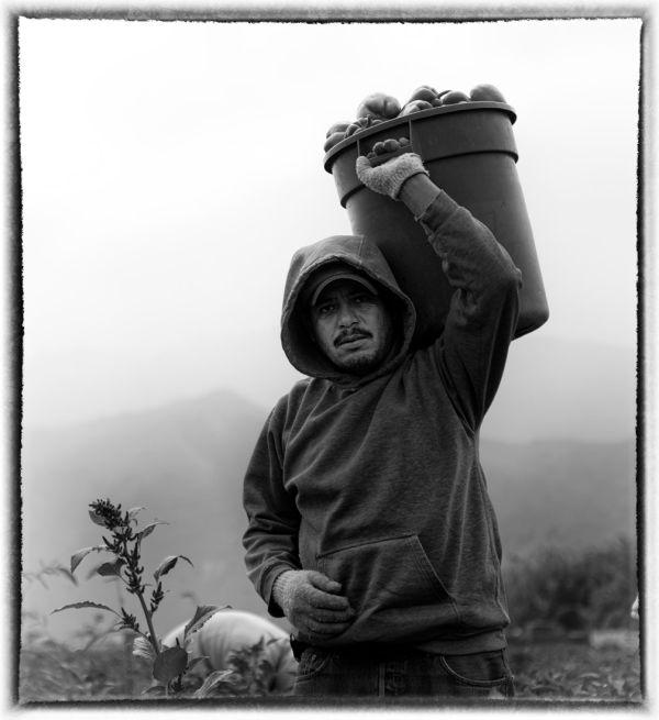 man in fields