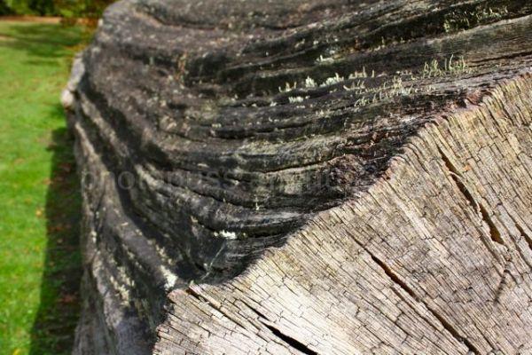 a mighty tree fallen