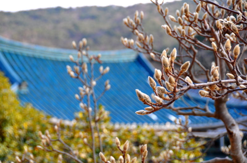Willow buds at a temple