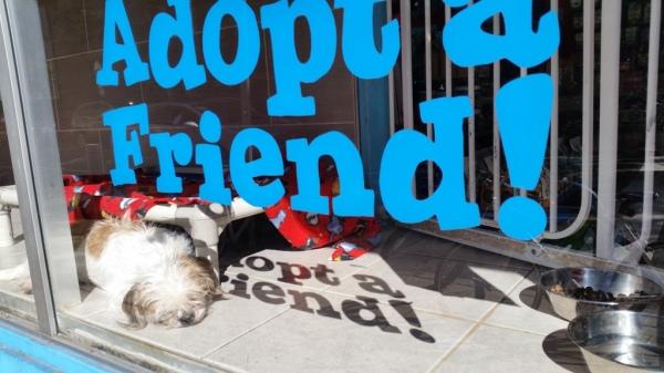 Adopt a friend