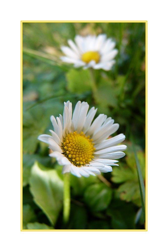 ... le printemps en promesse ...