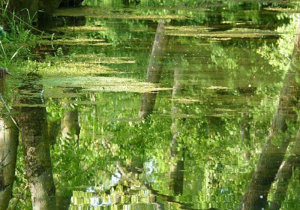 .... miroir d'eau ....