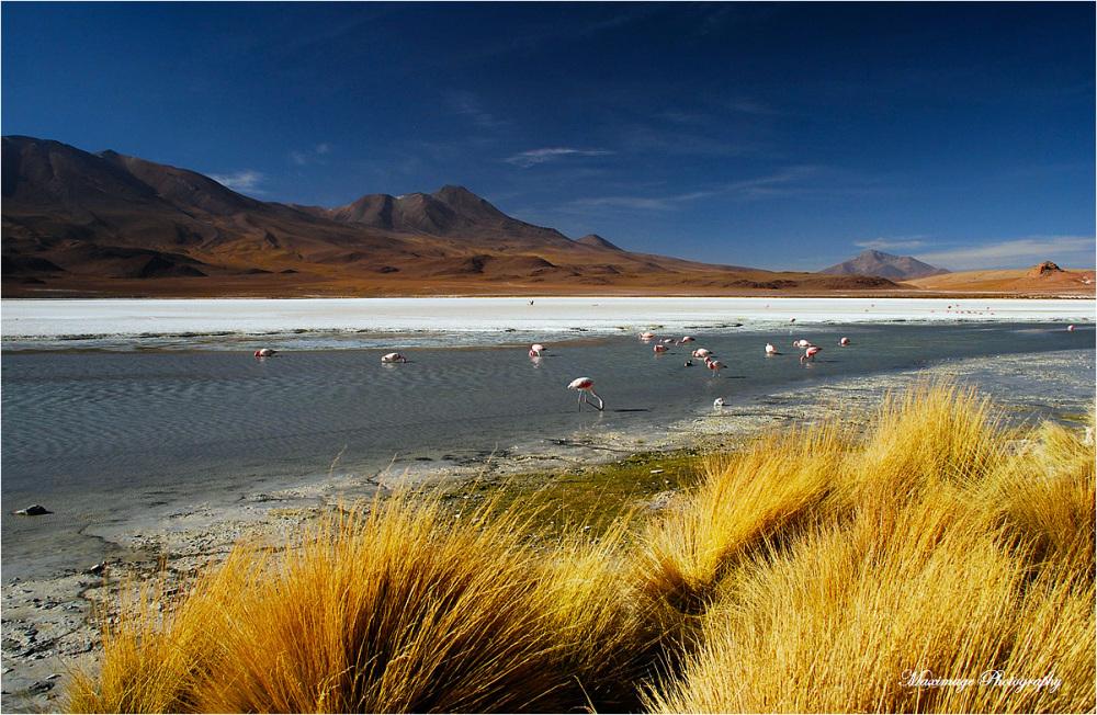 Lumières de l'Altiplano bolivien