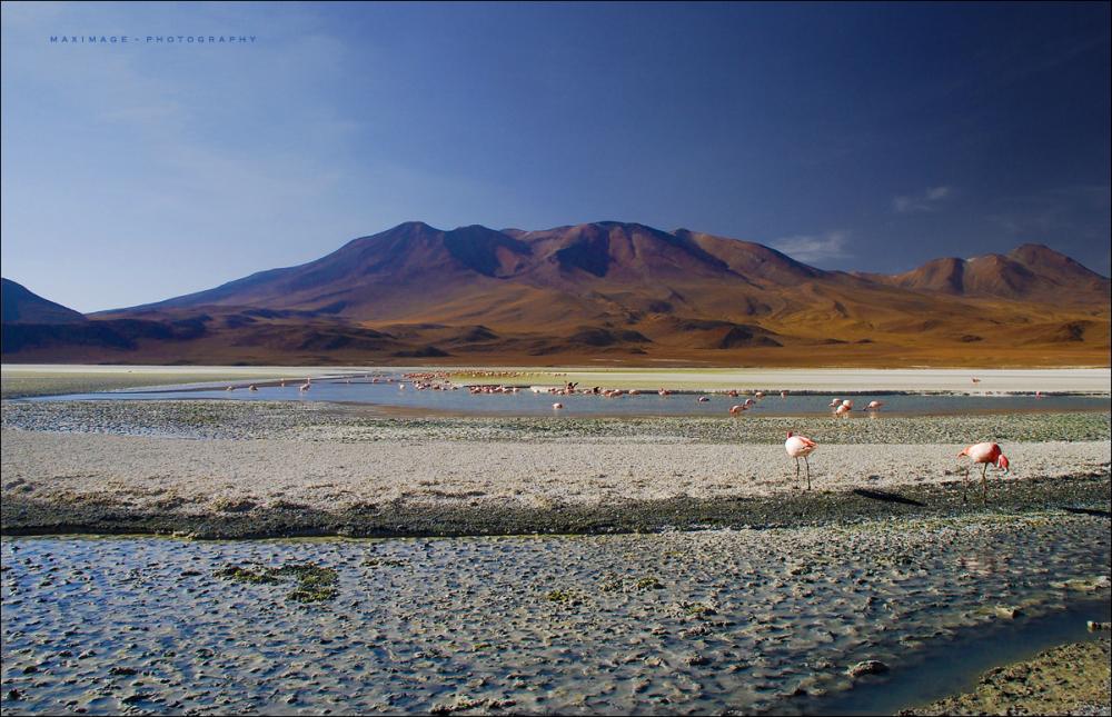 Couleurs de l'Altiplano bolivien