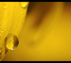 Yellow drop