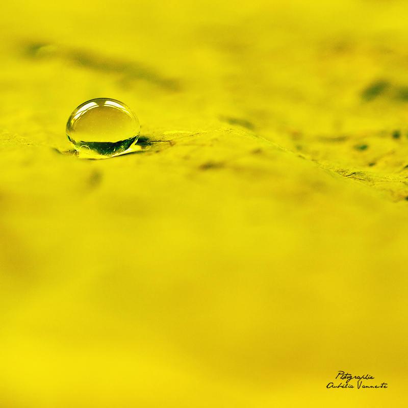 Une larme jaune
