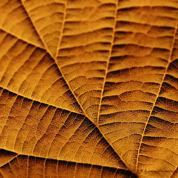 Leaf in golden tones