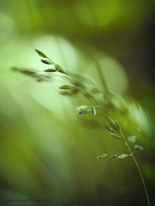 Grasses in the light