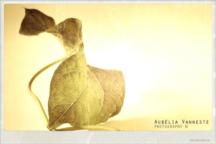 Leaf mood