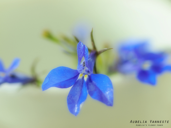 Blue softness