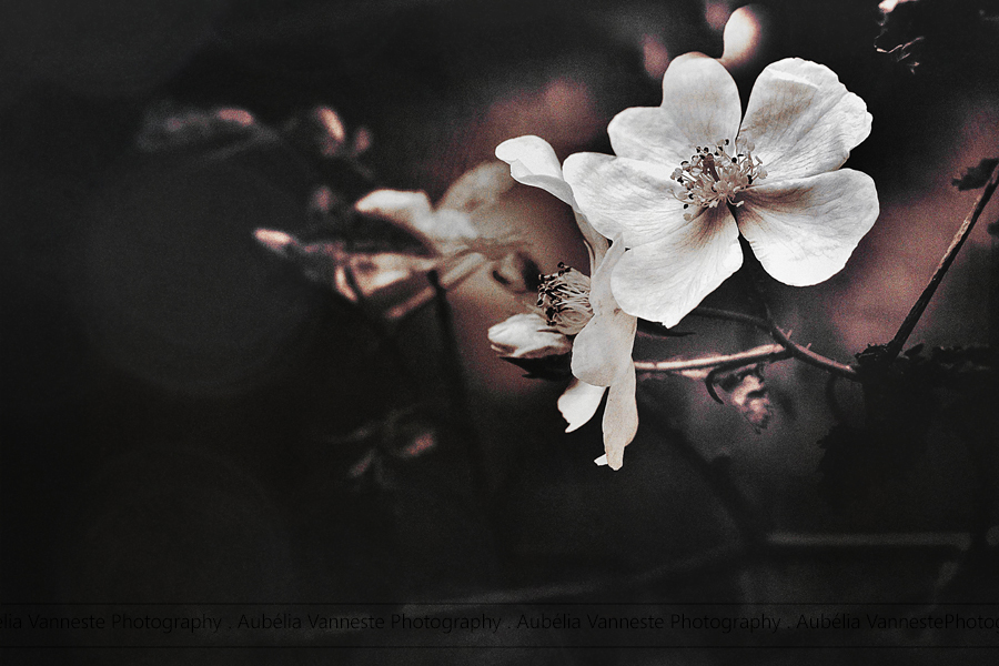Poetry with two, beautiful flowers