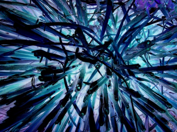 A color inverted image of cut reeds