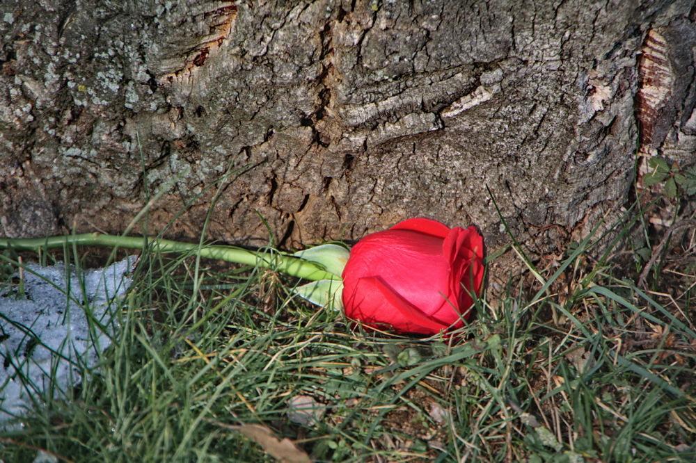 Oferiu flors als rebels que fracassaren