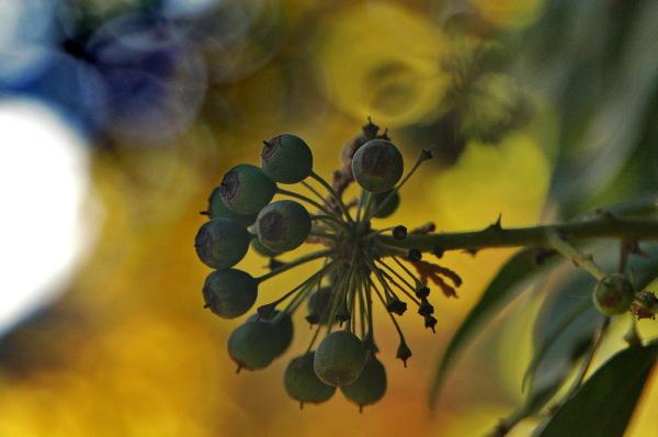Fruit de tardor -2