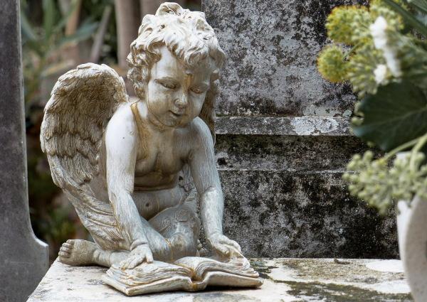 Petit àngel lector