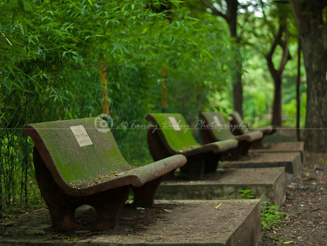 Sit in Greenery and just relax..