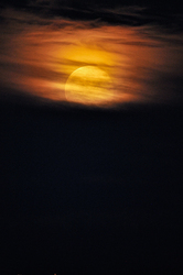 Bad Moon Rising.