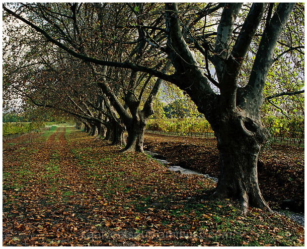 a leaf path