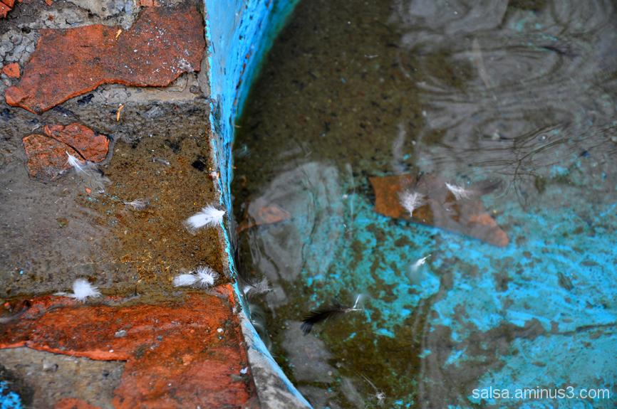 Turquoise - 5