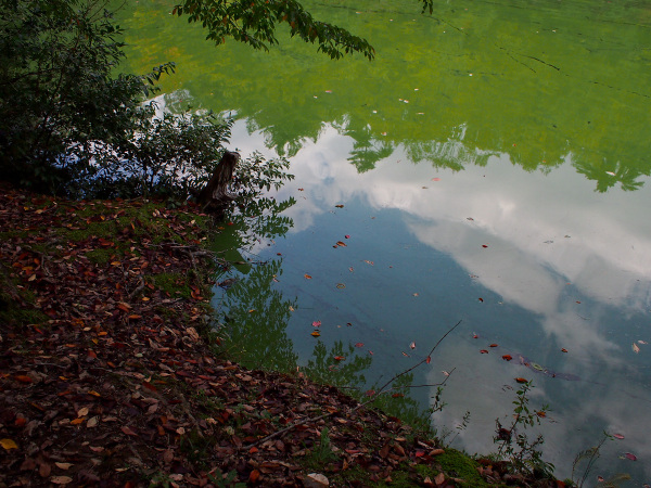 Fallen Leaf - 6 -