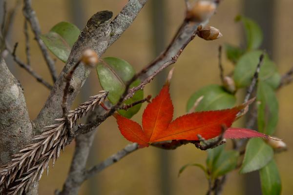 Autumn Colors - 4 -