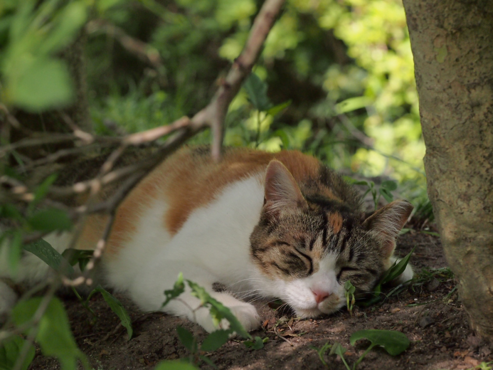 Lazy Afternoon - 141 -