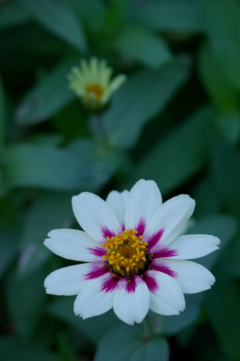 Autumn Flowers - 3 -