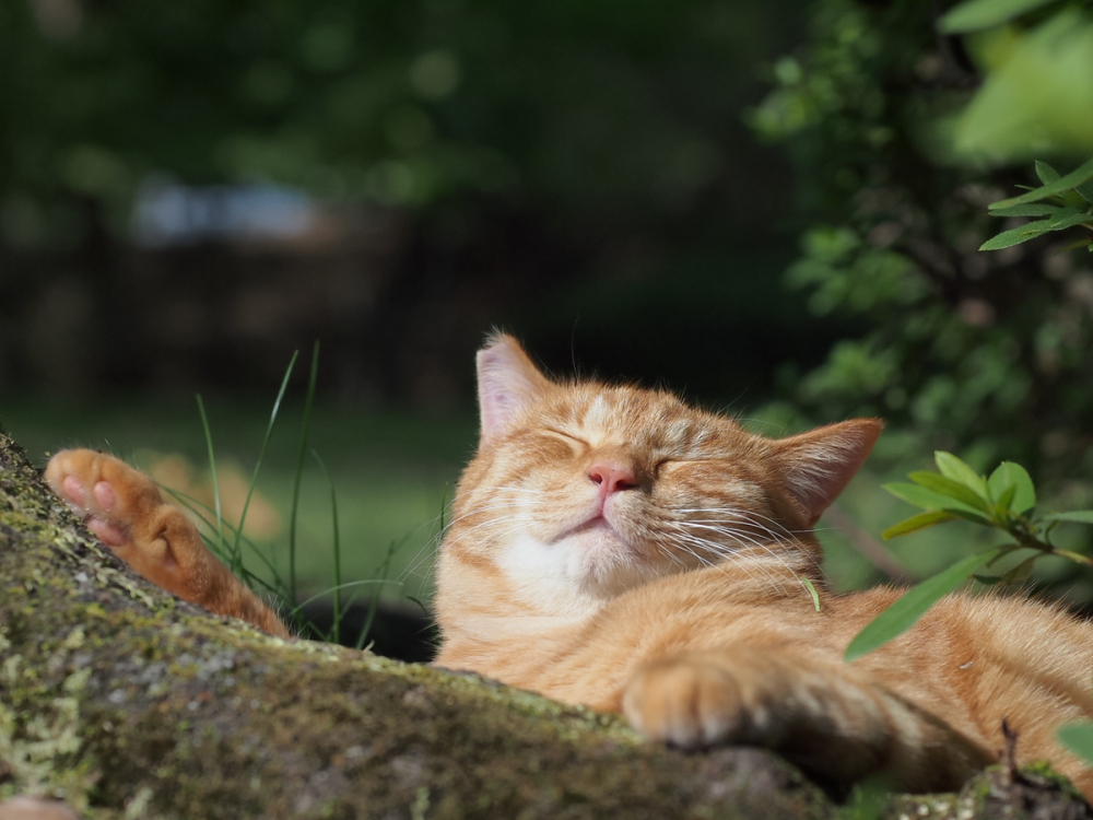 Lazy Afternoon - 217 -