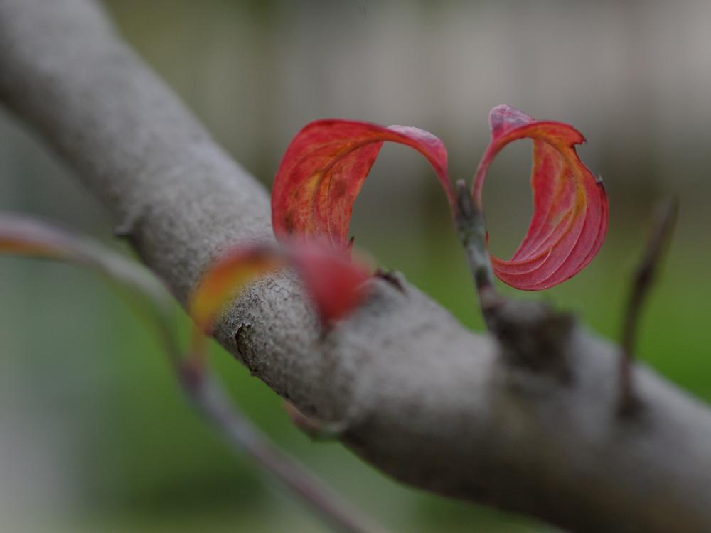 Autumn Colors - 15 -