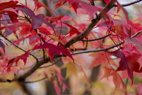 Autumn Colors - 17 -