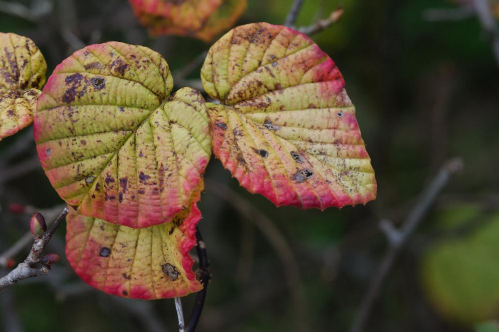 Autumn Colors - 19 -