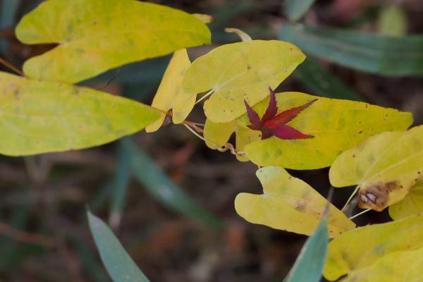 Autumn Colors - 25 -