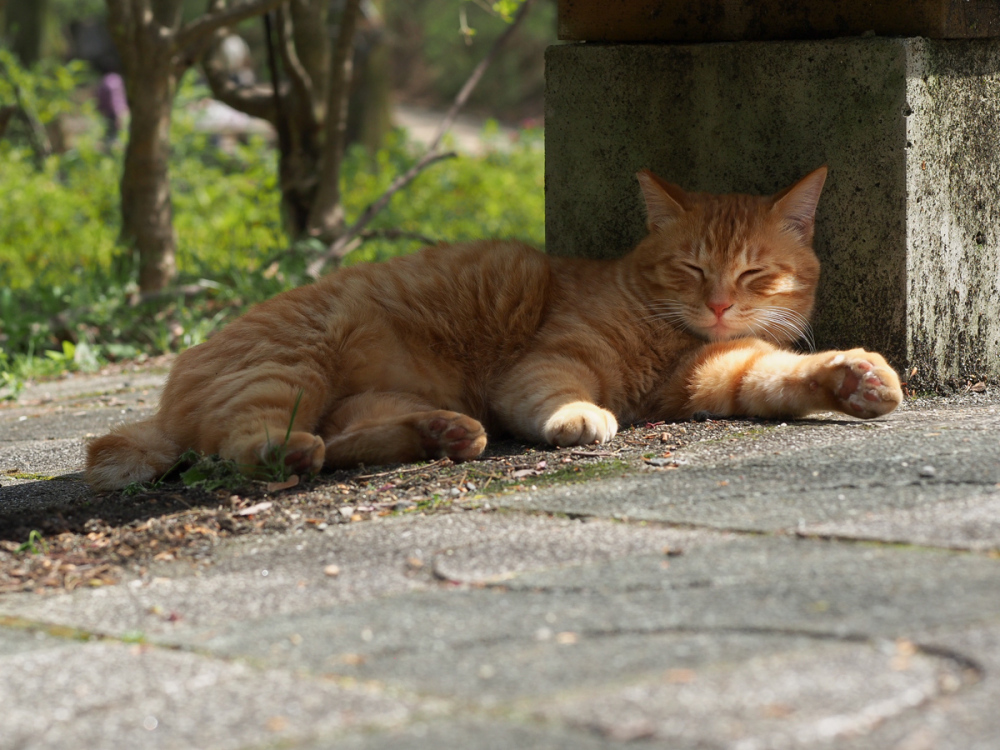 Lazy Afternoon - 303 -