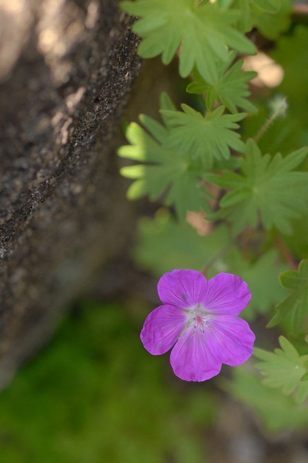 Spring Colors - 14 -