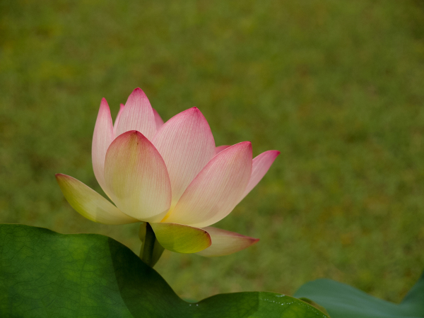 Flowers of Rainy Season - 4 -