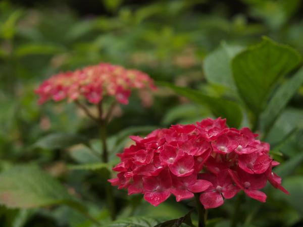 Flowers of Rainy Season - 5 -