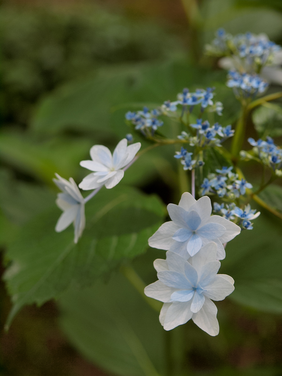 Flowers of Rainy Season - 6 -