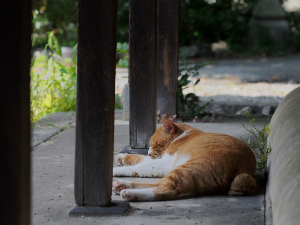 Lazy Afternoon - 364 -