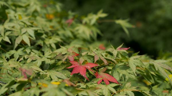 Autumn Colors - 46 -