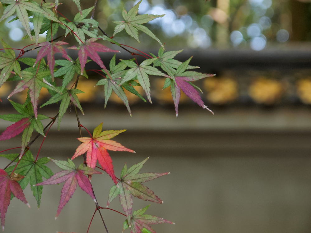 Colored Leaves  - 4 -